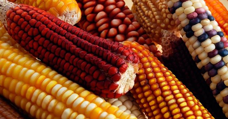 Patentan alimento nutritivo infantil a base de granos nativos