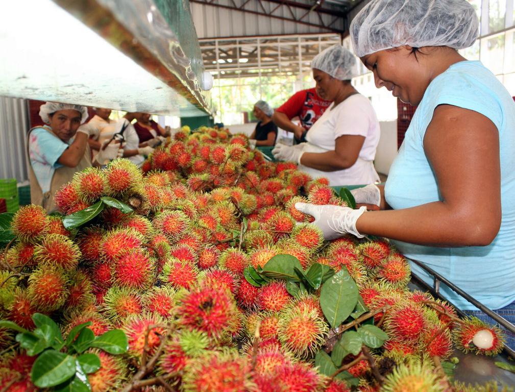 Costa Rica exportará frutas a Canadá
