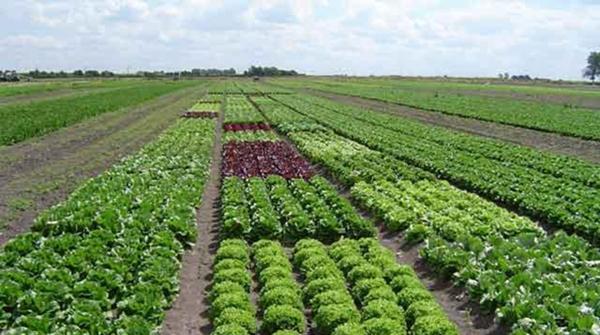 México y Nueva Zelanda promoverán el desarrollo agrícola e indígena
