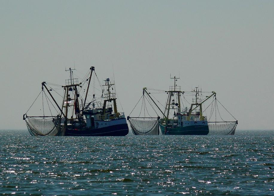 Cambio climático pone en riesgo a la pesca en México