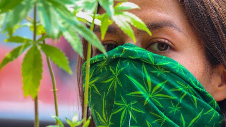 Todo sobre el uso lúdico de la marihuana en México: cuántas plantas se podrán tener por persona y cuáles serán las sanciones